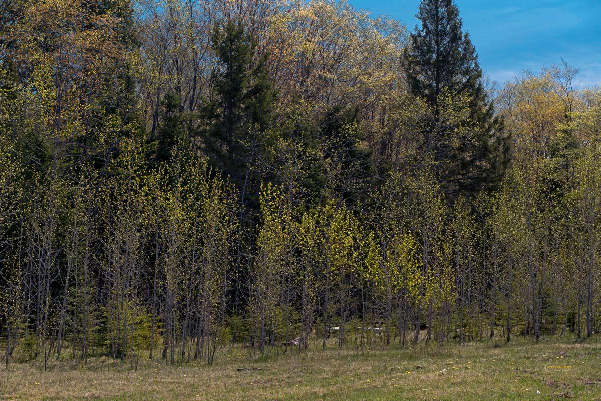 Michigan Landscapes